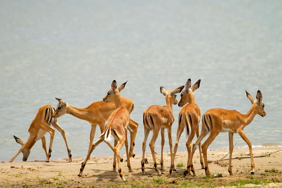 Southern Tanzania: Home to over half a million antelope the Selous Game Reserve has an abundance... [Photo of the day - ديسمبر 2012]