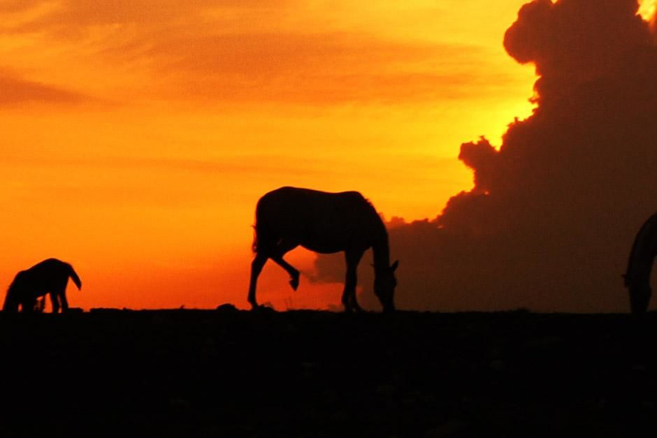 Big Cypress, FL, USA: A silhouette of a horse against the orange Florida sky. This image is from... [Photo of the day - دسامبر 2012]