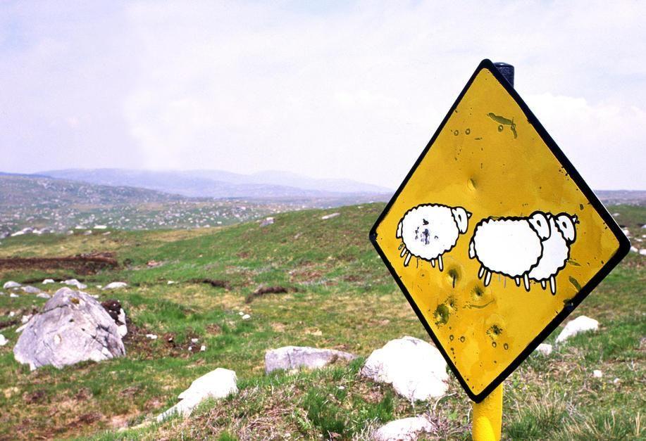 لافتة أيرلندية للطريق تصوِّر قطيعًا من الأغنام يعبر... [Photo of the day - أكتوبر 2011]