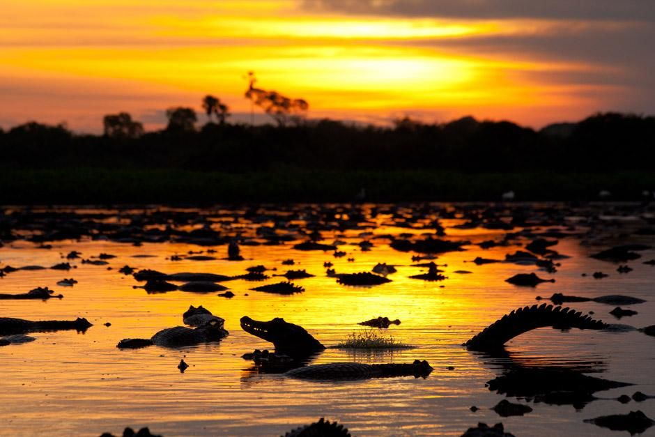 Caimans at sunset. This image is from Secret Brazil. [Photo of the day - January 2013]