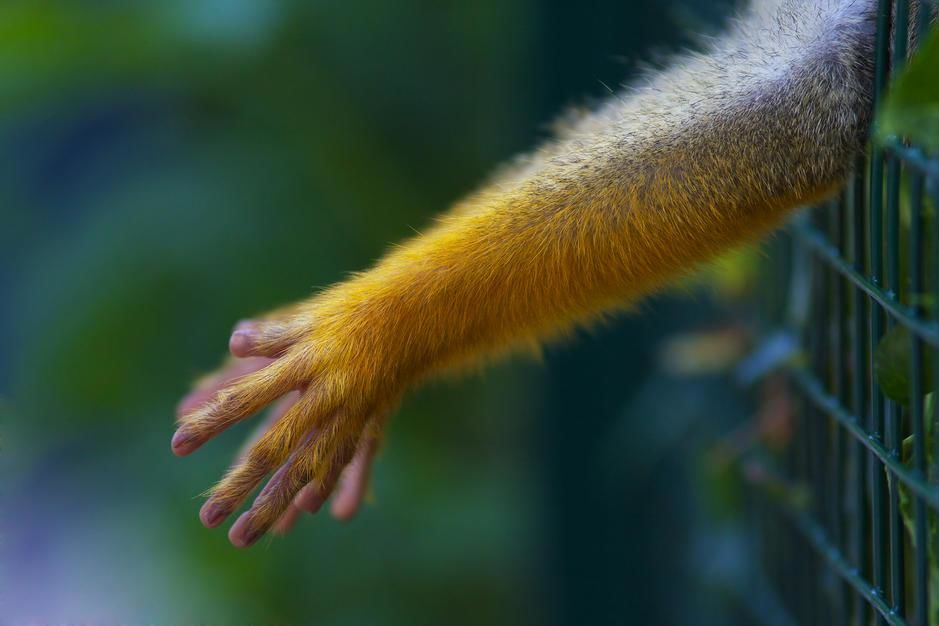 حيوانٌ غير معروف يصل إلى حديقة غير معروفة في قفص. [Photo of the day - أكتوبر 2011]