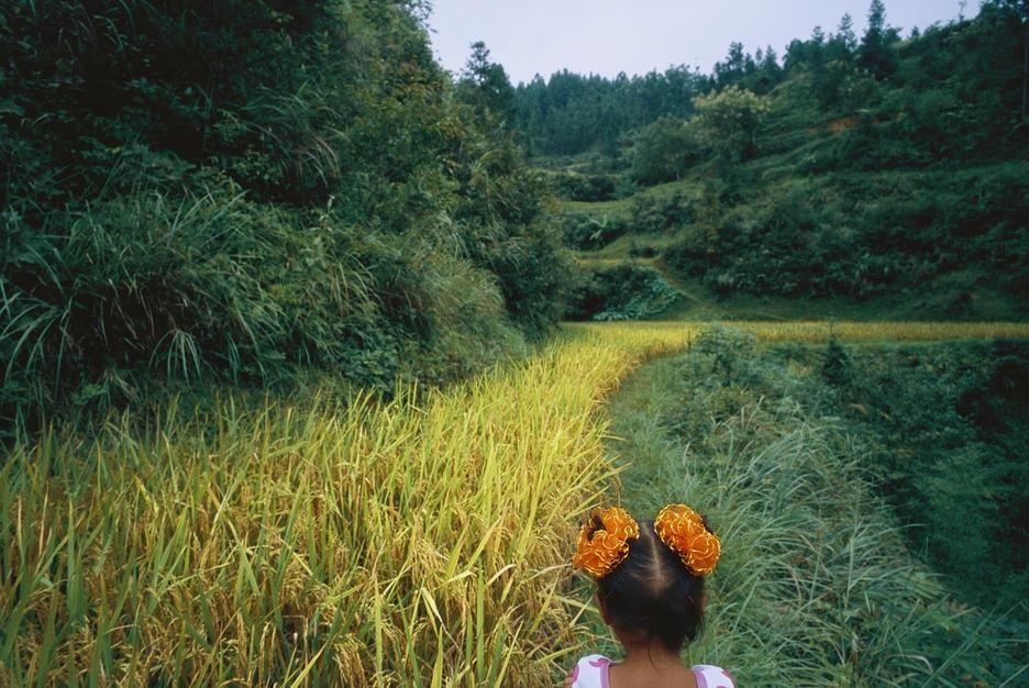 فتاة صغيرة تتجول في حقول الأرز خارج القرية في مقاطعة... [Photo of the day - أكتوبر 2011]