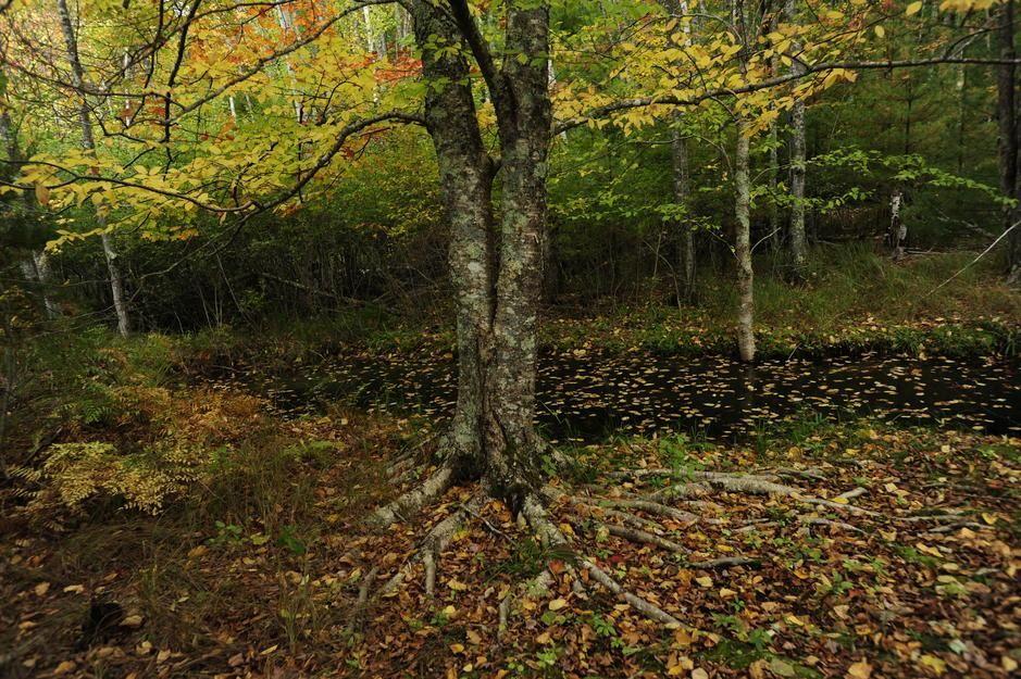 ألوان الخريف تكسو أشجار الحور الرجراج بطول بحيرة... [Photo of the day - أكتوبر 2011]
