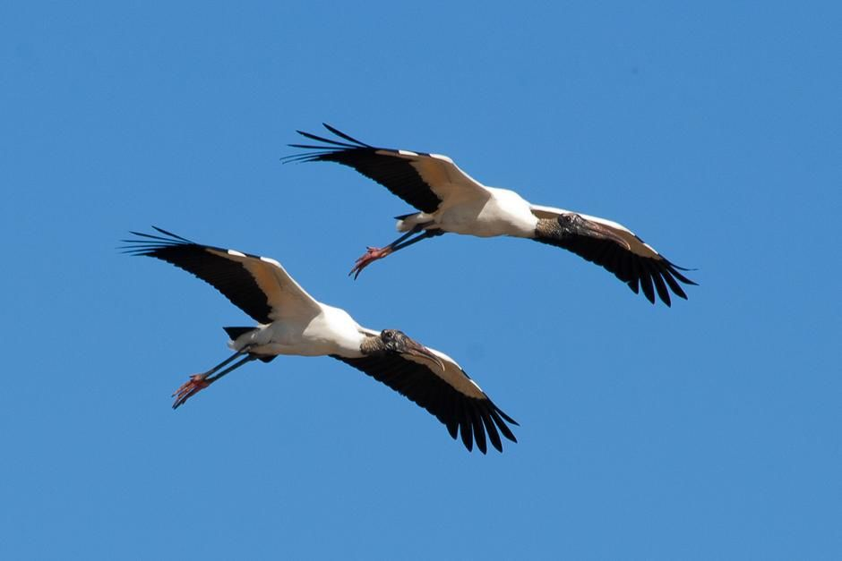 Storks flying. This image is from Secret Brazil. [Photo of the day - مارس 2013]