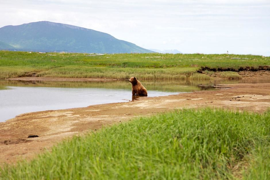 Katmai National Park, Alaska, United States: A grizzly bear sits in a shallow stream. This image... [Photo of the day - آوریل 2013]