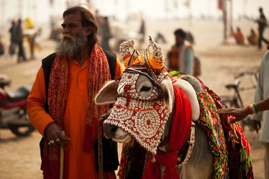 Allalhabad, India: A sacred adorned bull at the Kumbh Mela festival. The god Shiva used a bull,... [Photo of the day - آوریل 2013]