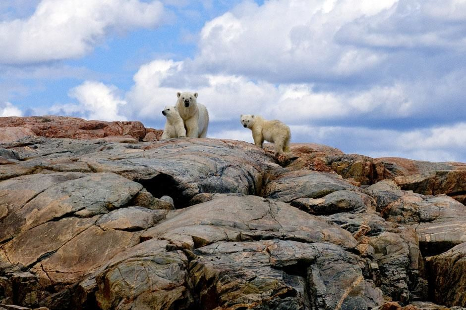 Canada: A polar bear mom and her cubs. This image is from Ice Bear. [Photo of the day - July 2013]