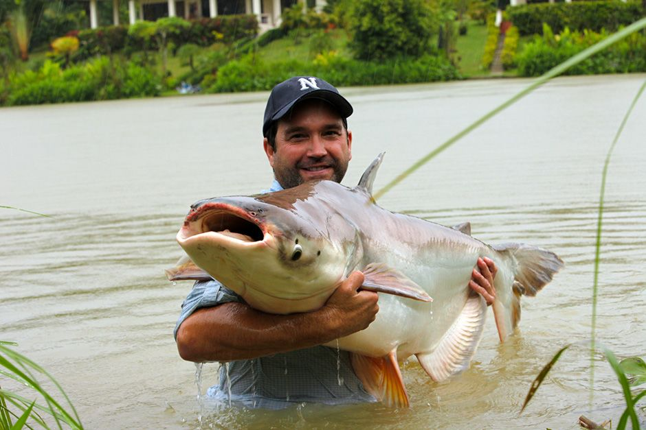 Thailand: Zeb Hogan holds a Mekong giant catfish caught from the nine-acre lake at Gillhams... [Photo of the day - November 2013]