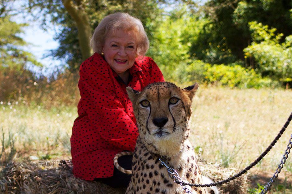 San Diego, California, USA: Betty White sitting with a big cat. This image is from Betty White... [Photo of the day - ژانویه 2014]