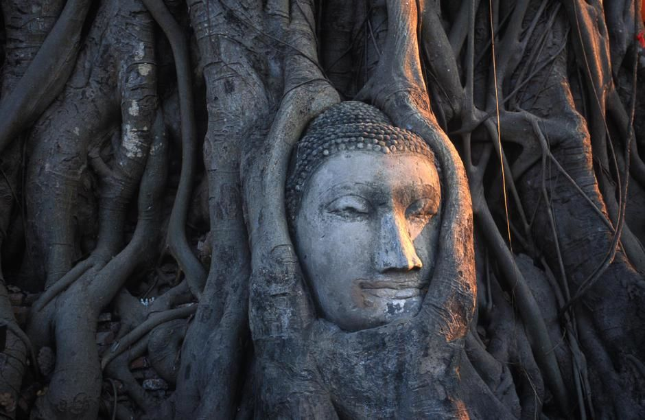 Sunlight falls on a tree root emtwined head of a Buddha statue in Wat Phra Maharthat, Ayuthaya. [Photo of the day - January 2012]