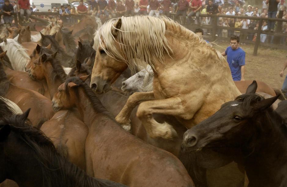آغل اسب های وحشی، فستیوال لاراپاداس بستاس - ویمیانزو... [Photo of the day - فوریه 2011]