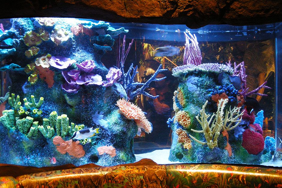 Orlando, Florida, USA:  The Rainforest Cafe's renovated reef structure is on display.  This... [Photo of the day - فوریه 2014]