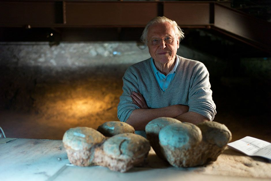 Lufeng Dinosaur National Geopark, China: Portrait of David Attenborough with Dinosaur eggs in... [Photo of the day - فوریه 2014]