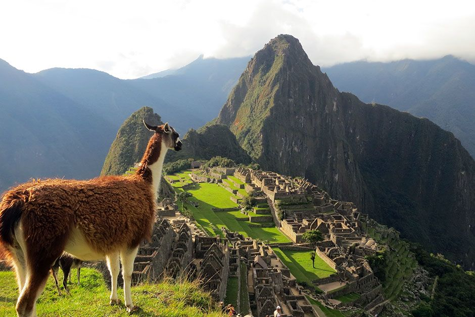 Machu Picchu, Cusco, Peru: A scenic shot of a llama looking towards Machu Picchu in Cusco, Peru.... [Photo of the day - فوریه 2014]
