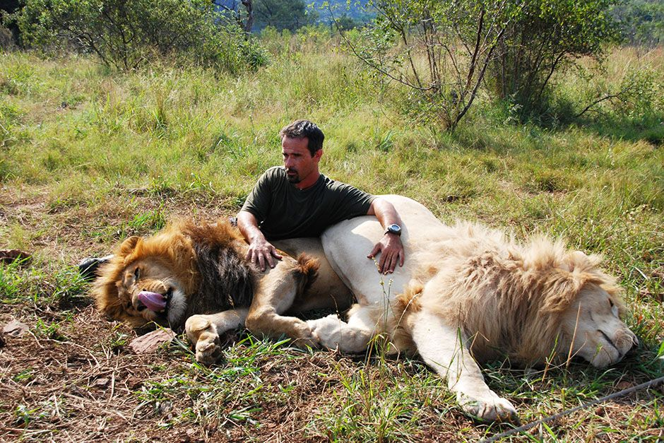 Kevin Richardson sitting with two resting Lions. This image is from The Lion Whisperer. [Photo of the day - 三月 2014]
