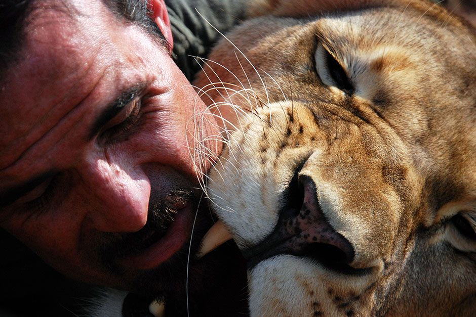 Kevin Richardson and a Lion getting up close with each other. This image is from The Lion Whisperer. [Photo of the day - March 2014]