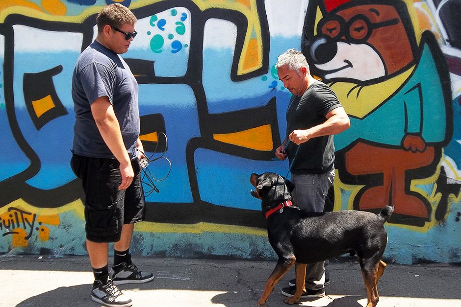 Los Angeles, CA: Steve looking at Cesar holding Shadow. This image is from Cesar To The Rescue. [Photo of the day - آوریل 2014]