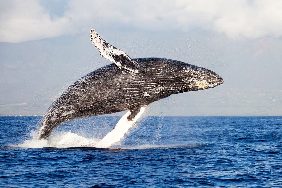 A whale breaching. This image is from Animals Gone Wild. [Photo of the day - May 2014]