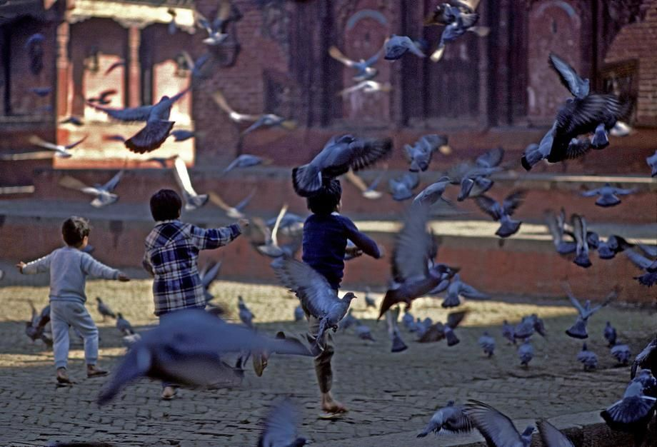 Children chase piegions in Durbar Square, Kathmandu. [Photo of the day - March 2011]
