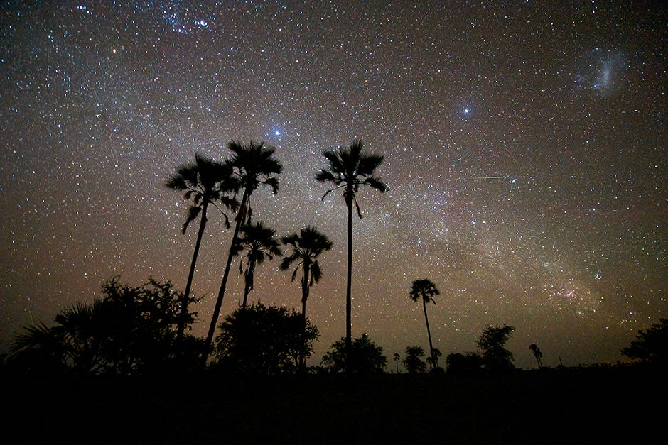 The Milky Way behind a palm forest adjoining the Makgadikgadi Pans. This image is from Wild... [Photo of the day - June 2014]