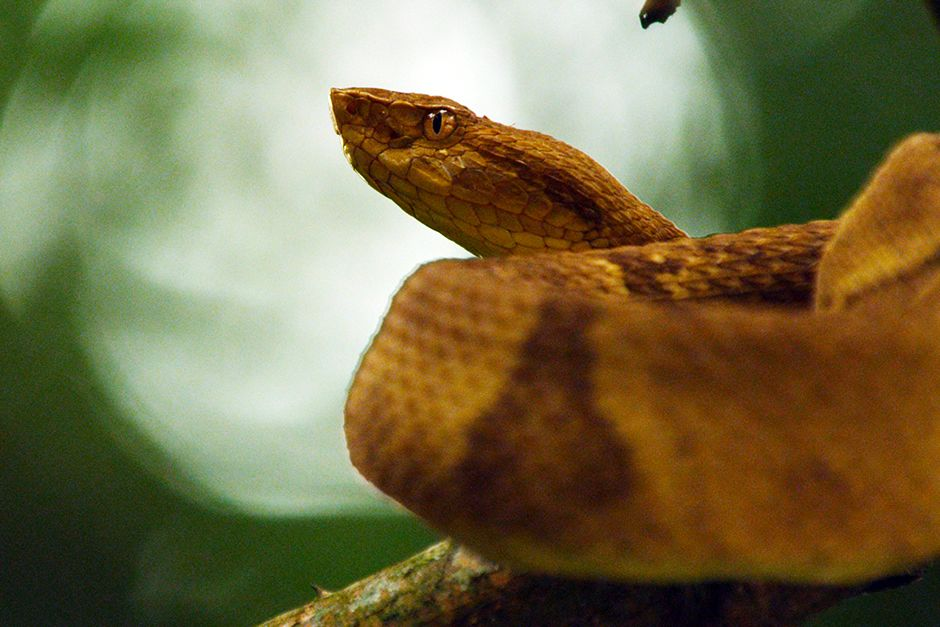 A snake. This image is from Wild Untamed Brazil. [Photo of the day - June 2014]