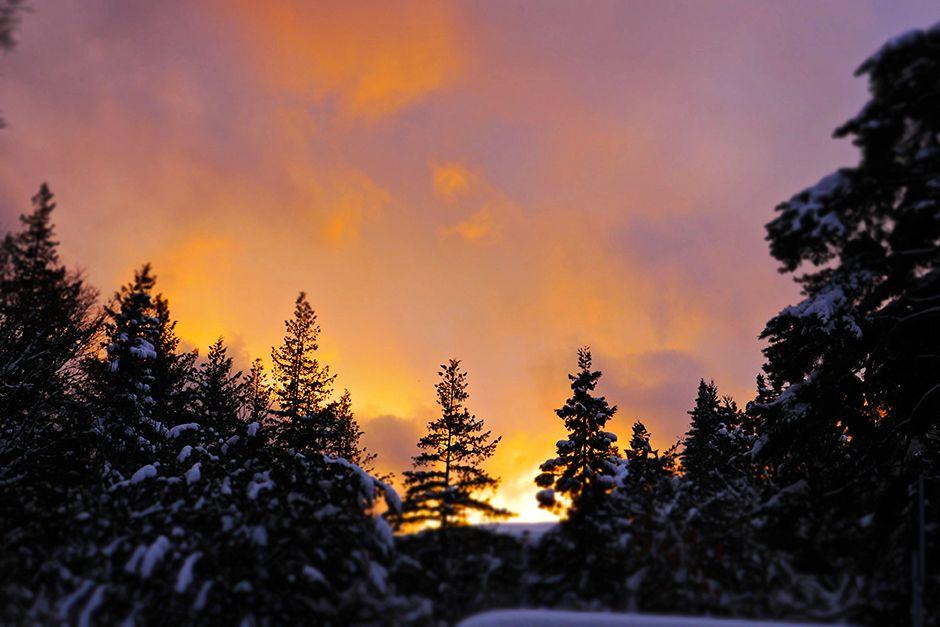 Jigokudani, Japan:  Sunset over the cedar forest. The Jigokudani Yaen-koen is located in the... [Photo of the day - July 2014]