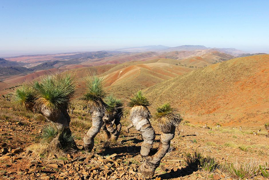 View from Mount Arden, Southern Flinders Ranges / South Australia direction Wilpena Pound. Some... [Photo of the day - July 2014]