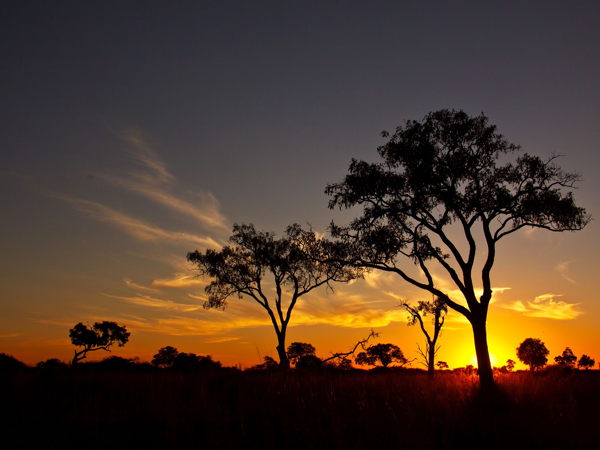 A Botswanan Sunset. This image is from Wild Botswana: Lion Brotherhood. [Photo of the day - September 2014]