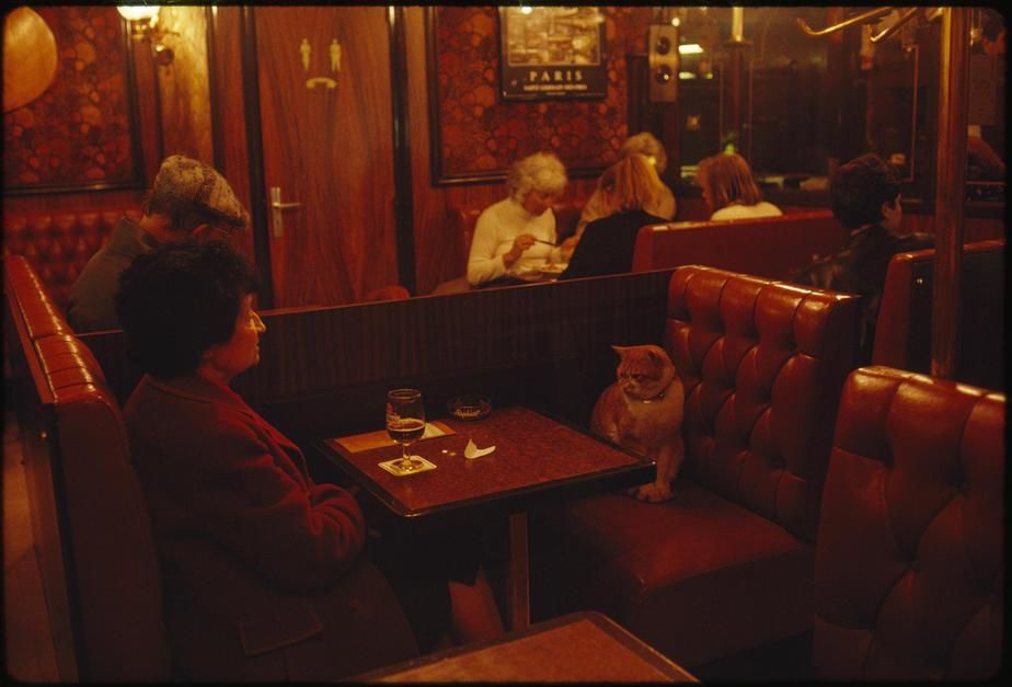 "A regular at Le Louis IX, ""Caramel"" keeps a client company in Paris. [Photo of the day - April 2011]"