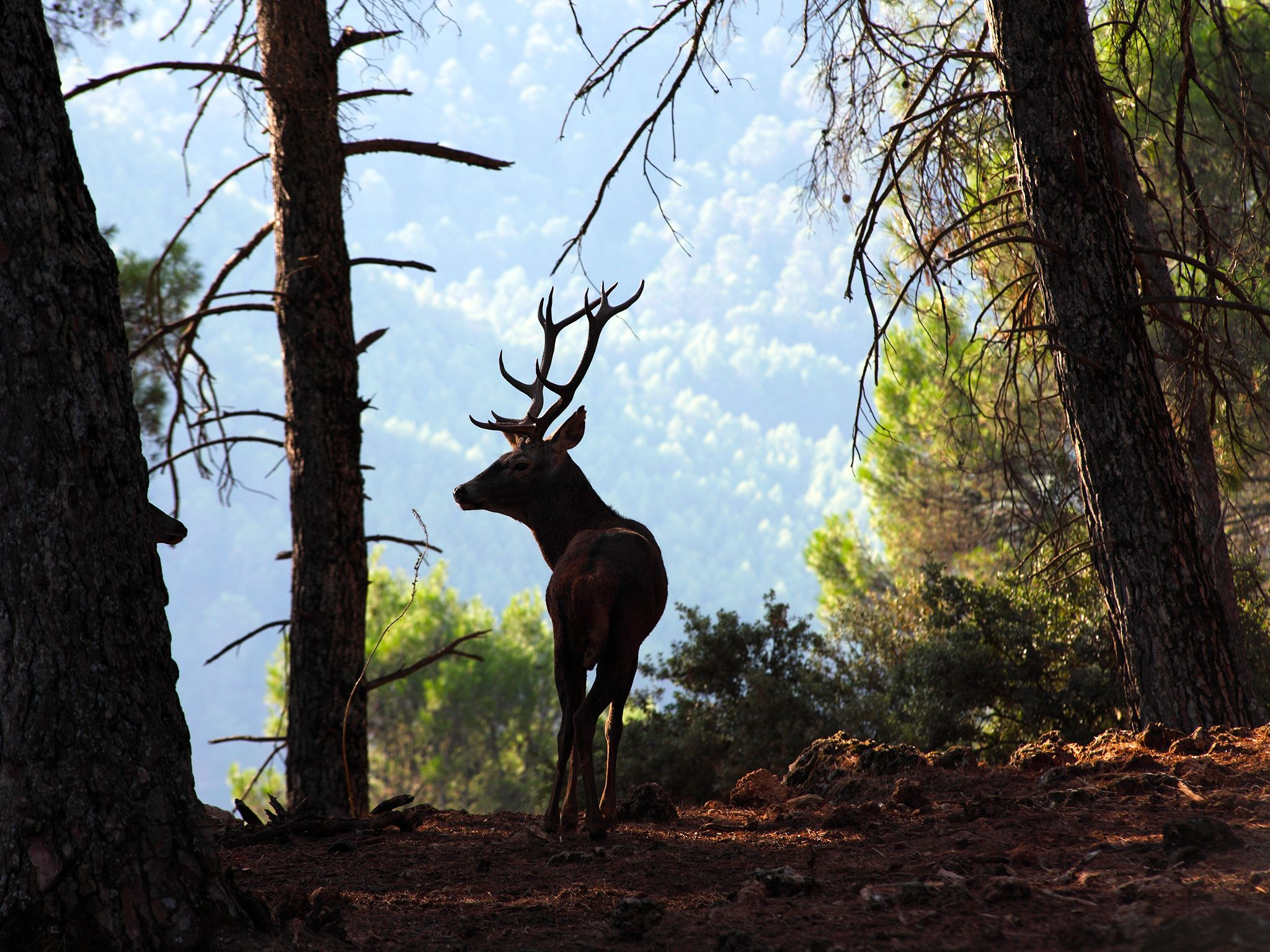 Spain: The large spaces of the Sierra Morena are densely populated by herds of Red deer. This... [Photo of the day - December 2014]
