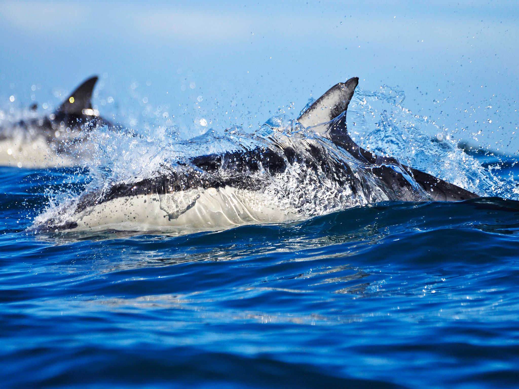 كيب تاون، جنوب إفريقيا:  خلال هجرة أسماك السردين في... [Photo of the day - يناير 2015]