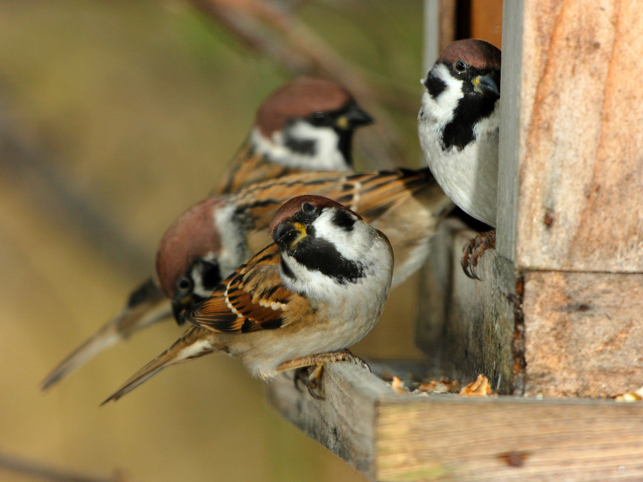 Countless songbirds live in our gardens. Besides their beautiful songs they are also very... [Photo of the day - January 2015]