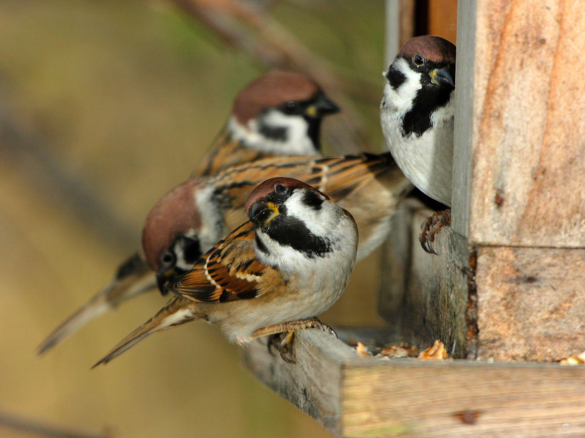 عدد لا يحصى من الطيور المغردة تعيش في حديقتنا. فضلاً... [Photo of the day - يناير 2015]