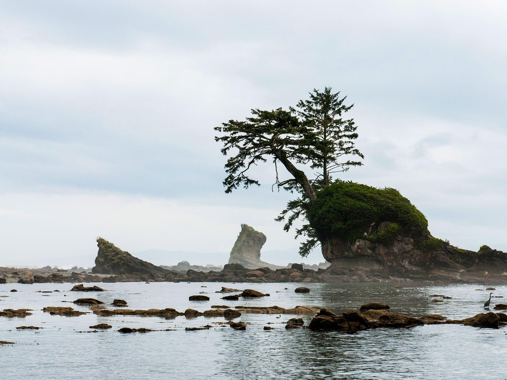 منطقة شمال غرب المحيط الهادئ. هذه الصورة من سلسلة... [Photo of the day - يناير 2015]
