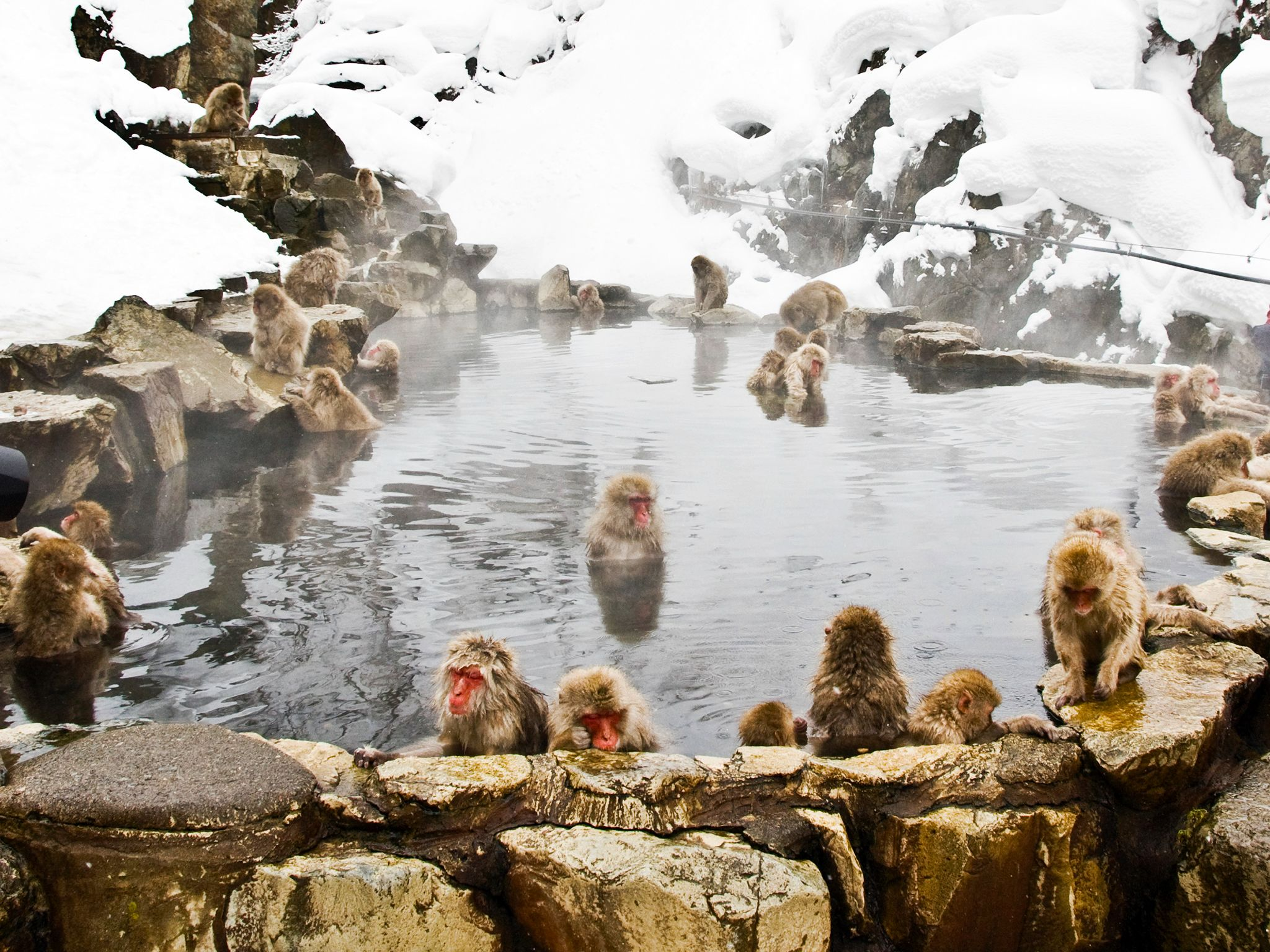 Japanese macaques have been visiting this hot pool since the 1960s. This image is from Japan's... [Photo of the day - April 2015]