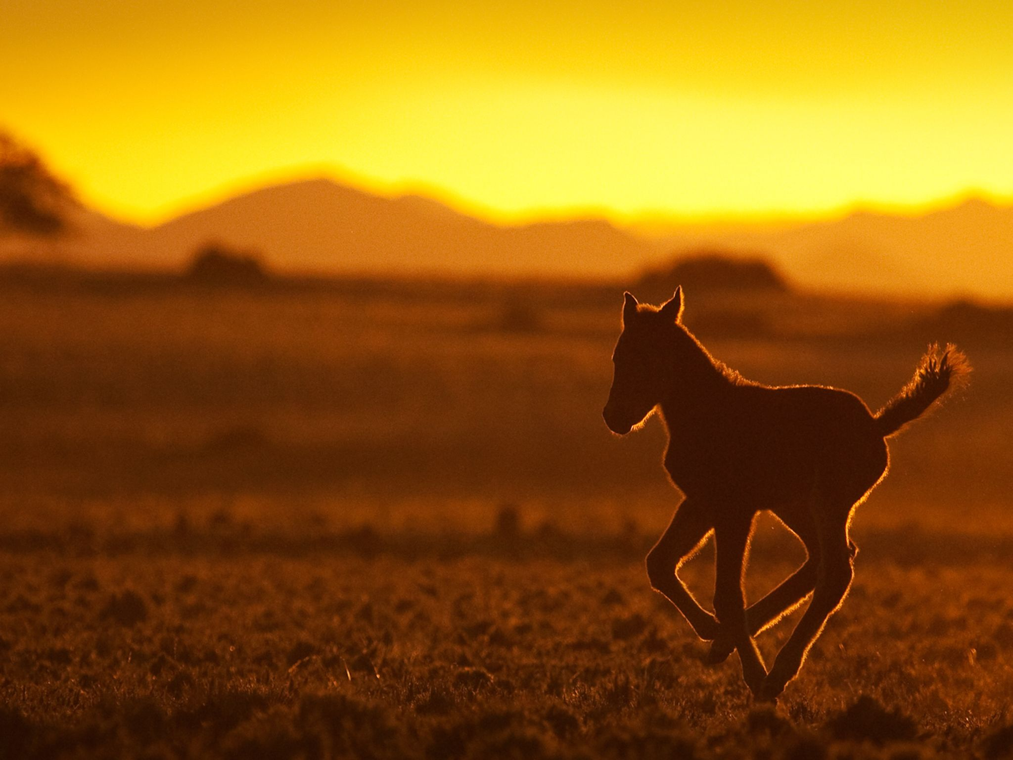 Namibia: A foal in the sunset. This image is from Africa's Wild West. [Photo of the day - آوریل 2015]