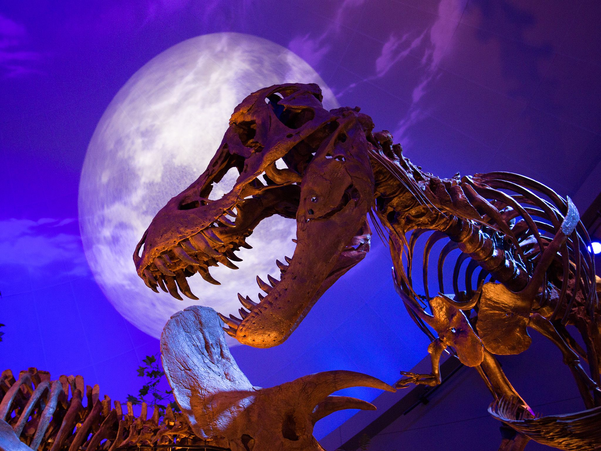 Indianapolis, Ind.: The dinosaur exhibit at The Children's Museum of Indianapolis breathes new... [Photo of the day - June 2015]