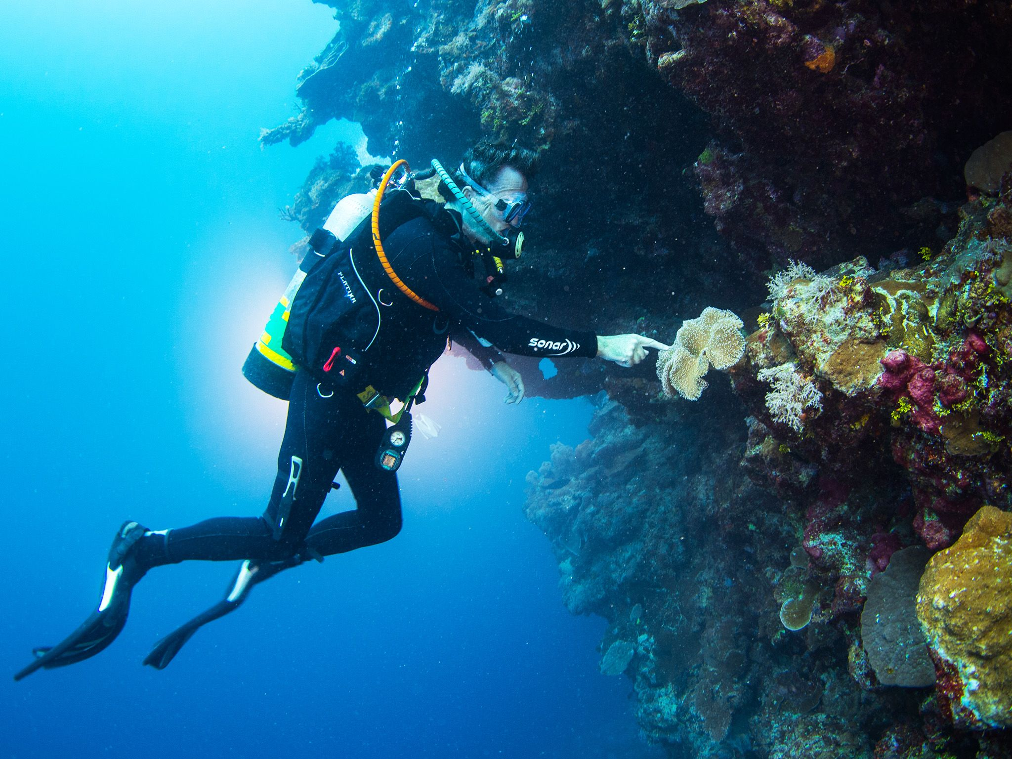 Great Barrier Reef: Commercial dive instructor Paddy Colwell inspecting the marine life on the... [Photo of the day - June 2015]