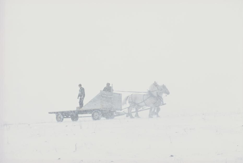 Feeding cattle in the snow on the Padlock Ranch in Montana. [Photo of the day - June 2011]