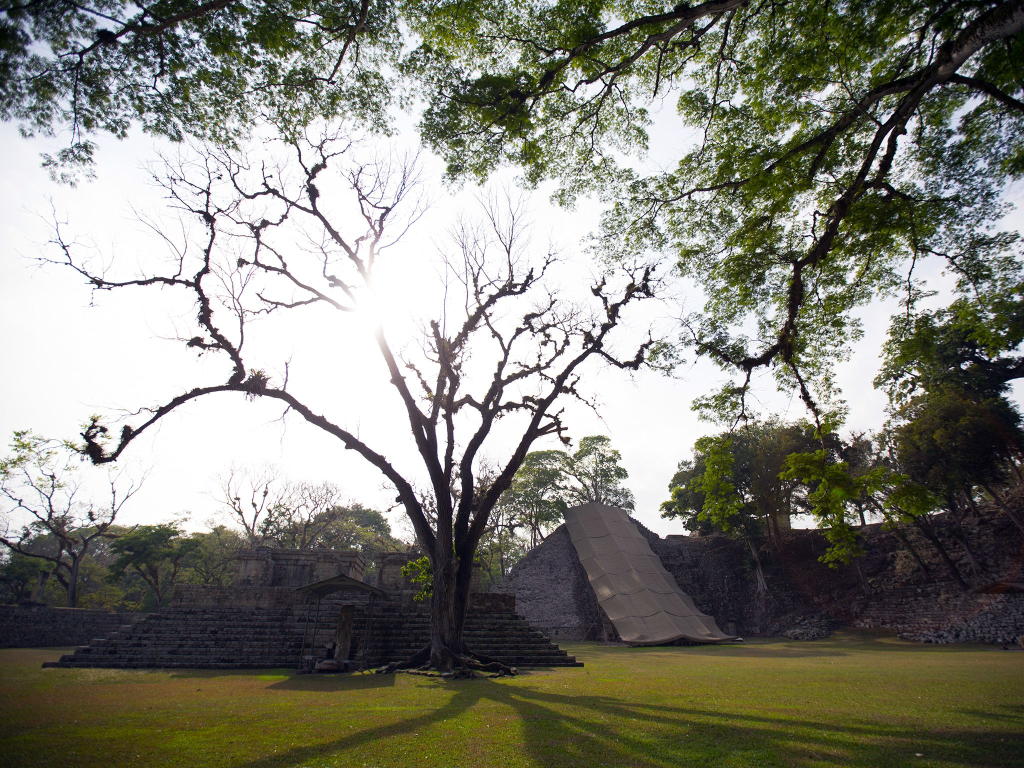 Copán, Honduras: The Copán ruins in Honduras. This image is from Legend of the Monkey God. [Photo of the day - 十月 2015]