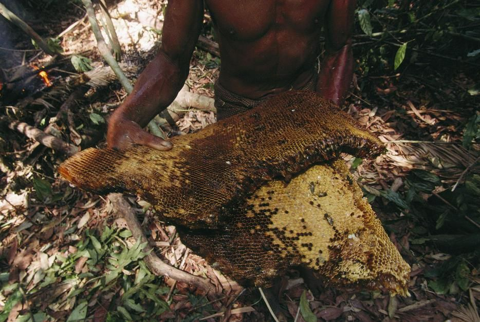 Barechested Moken tribesman with honeycomb in a forest, Nyawi Island. [Photo of the day - ژوئن 2011]
