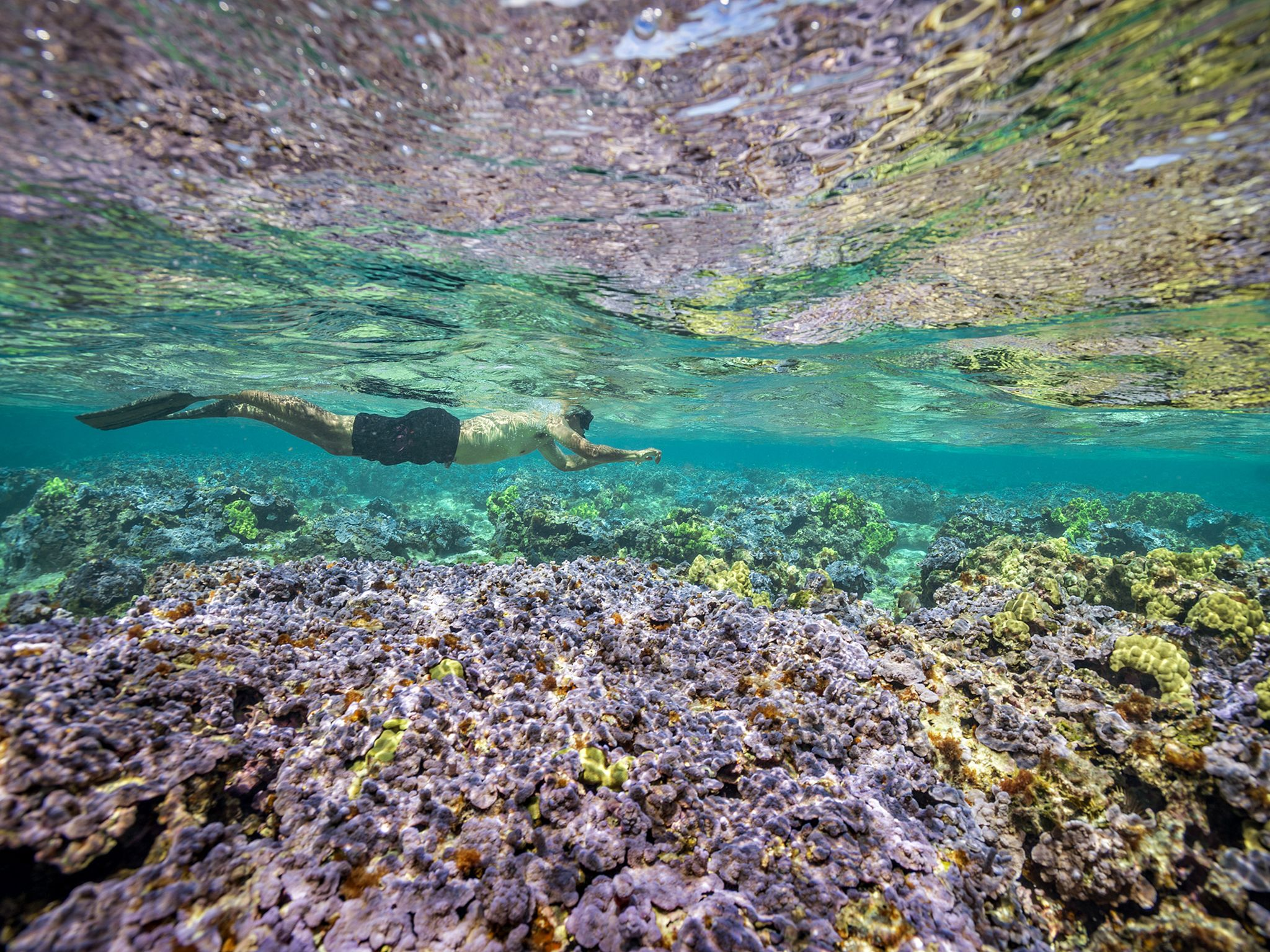 President Barack Obama swims above the colourful corals of Midway Atoll. The turning point of... [Photo of the day - ژانویه 2017]