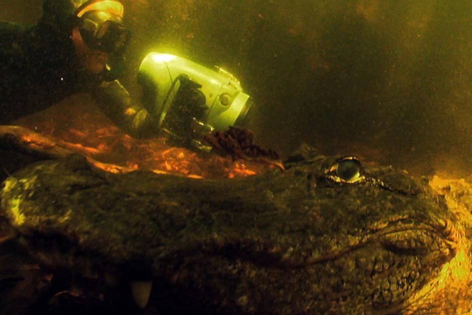 قام المصوِّر مارك راكلي بتصوير التمساح الأمريكي في... [Photo of the day - فبراير 2012]