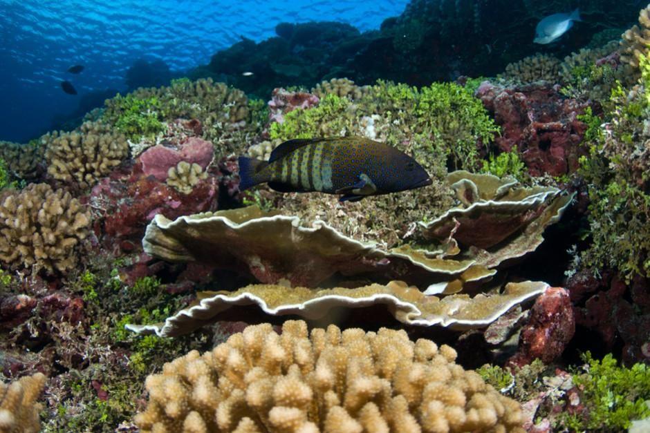 سرب من الأسماك يسبح داخل إحدى الشعاب المرجانية التي... [Photo of the day - فبراير 2012]