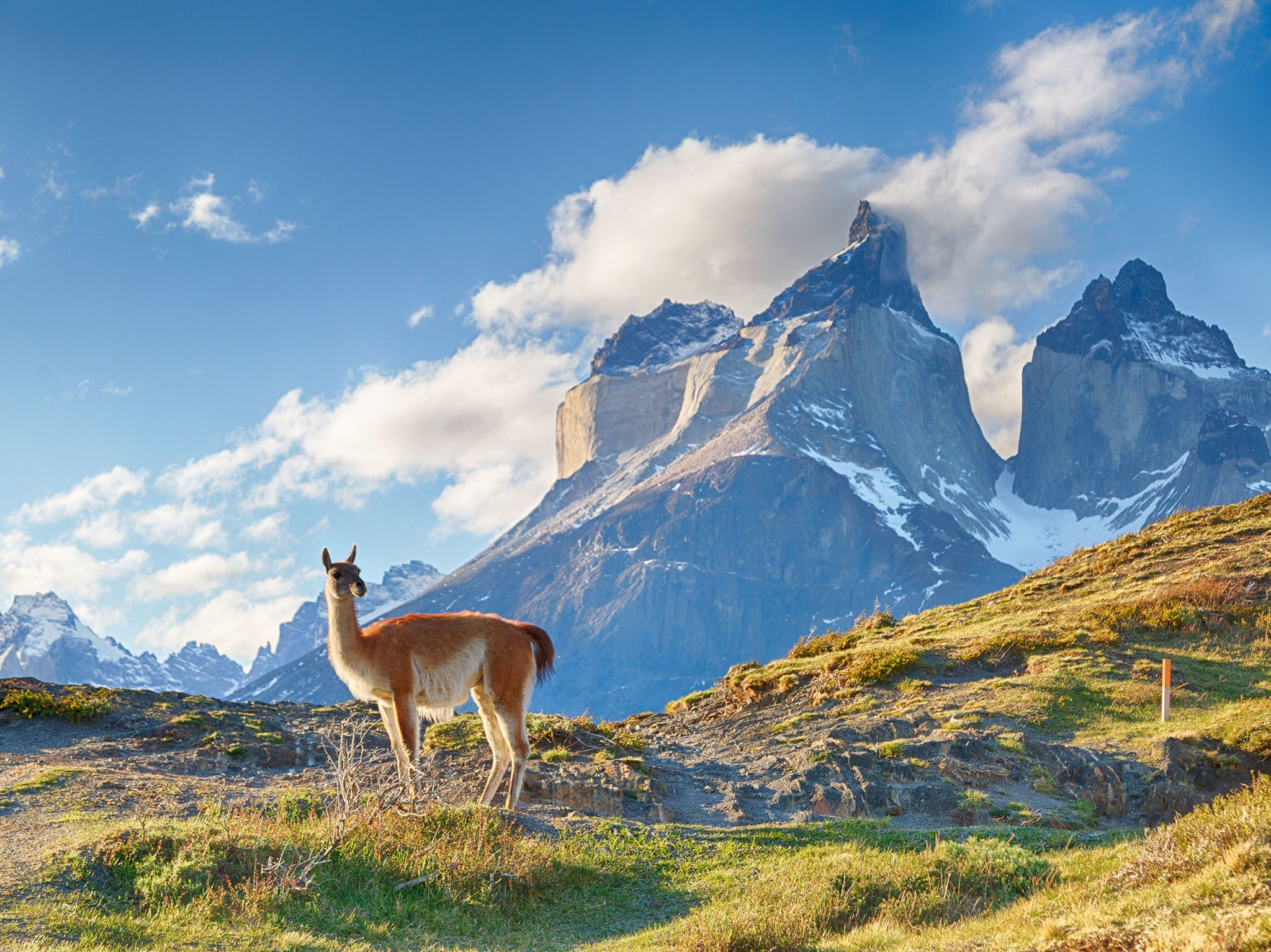 Guanaco in Chilean Patagonia. This image is from Extreme Animals. [Photo of the day - June 2017]