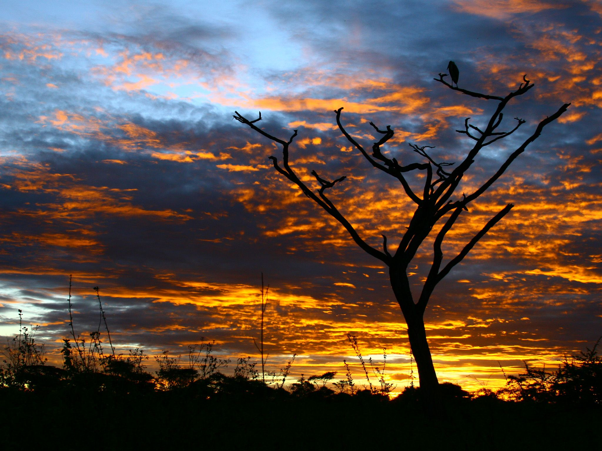 Dead acacia tree with stork at sunrise.  This image is from Kings of the Kill. [Photo of the day - August 2017]