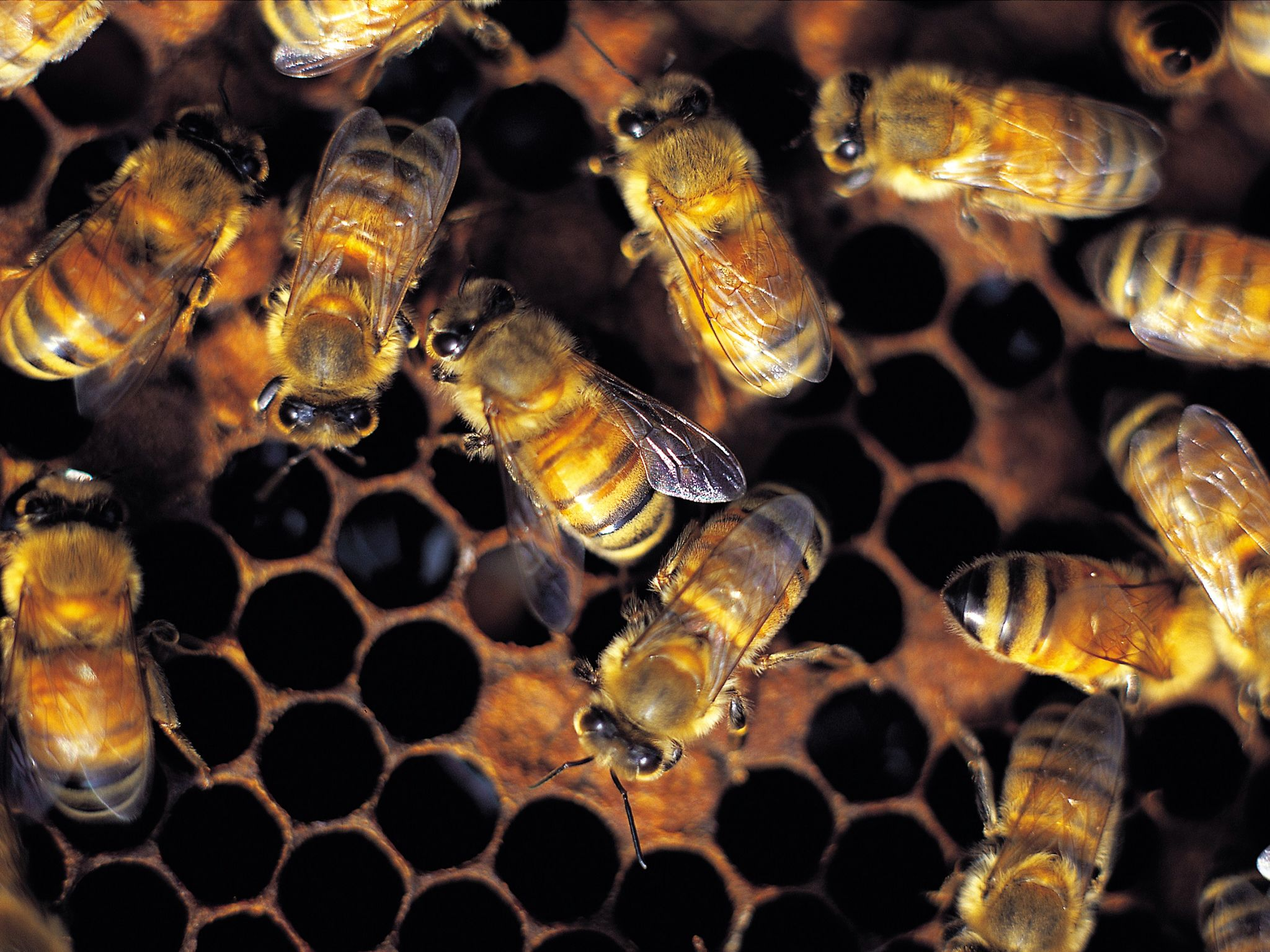 Close up bees. This image is from Man V. Animal. [Photo of the day - September 2017]
