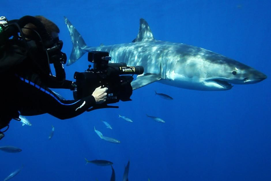 False Bay, South Africa: Andy Casagrande filming a great white shark. To ensure a False Bay,... [Photo of the day - March 2012]