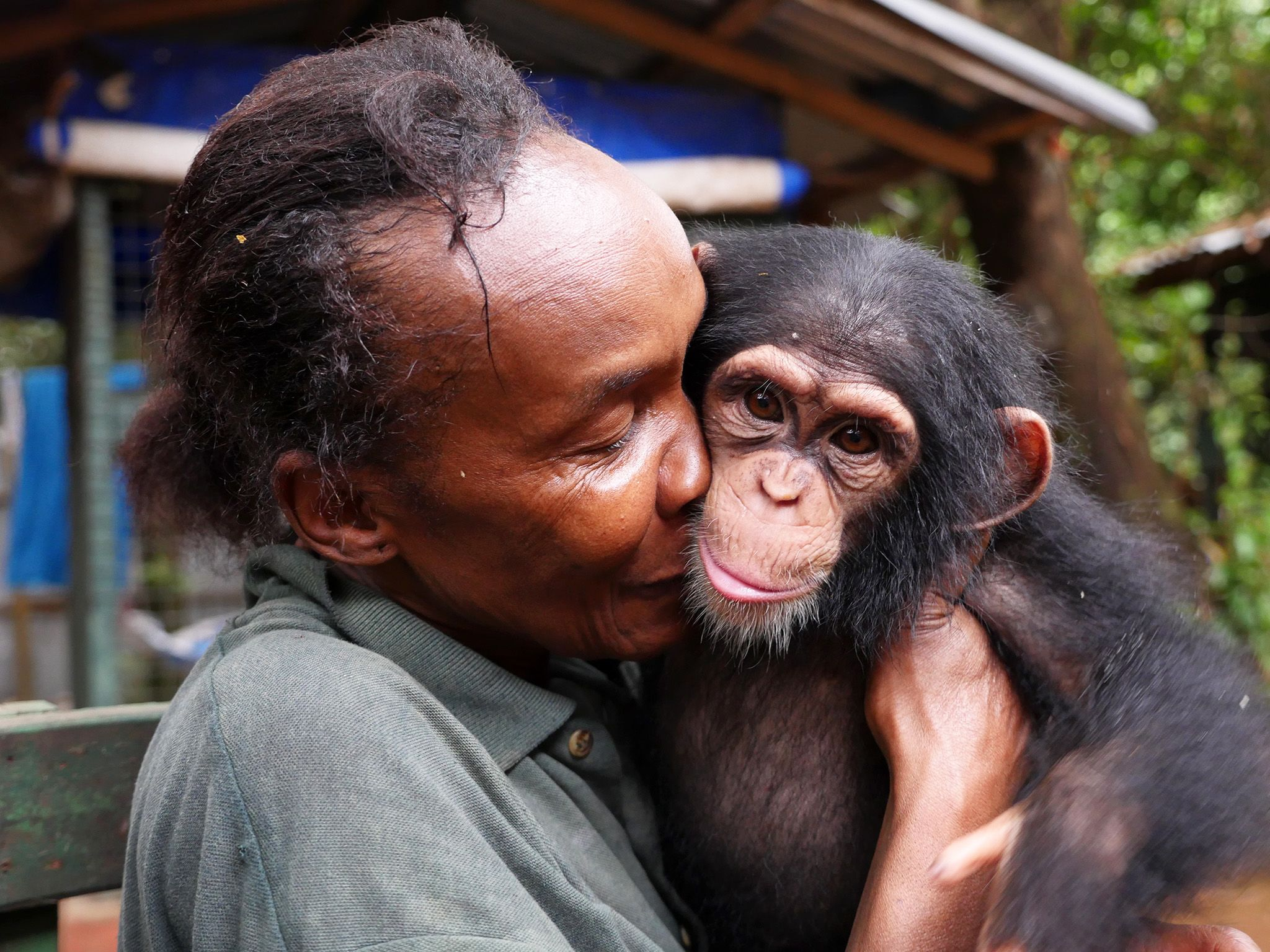 Sierra Leone:  Mama Posseh has an extraordinary connection with baby chimps. This image is from... [Foto del giorno - ottobre 2017]