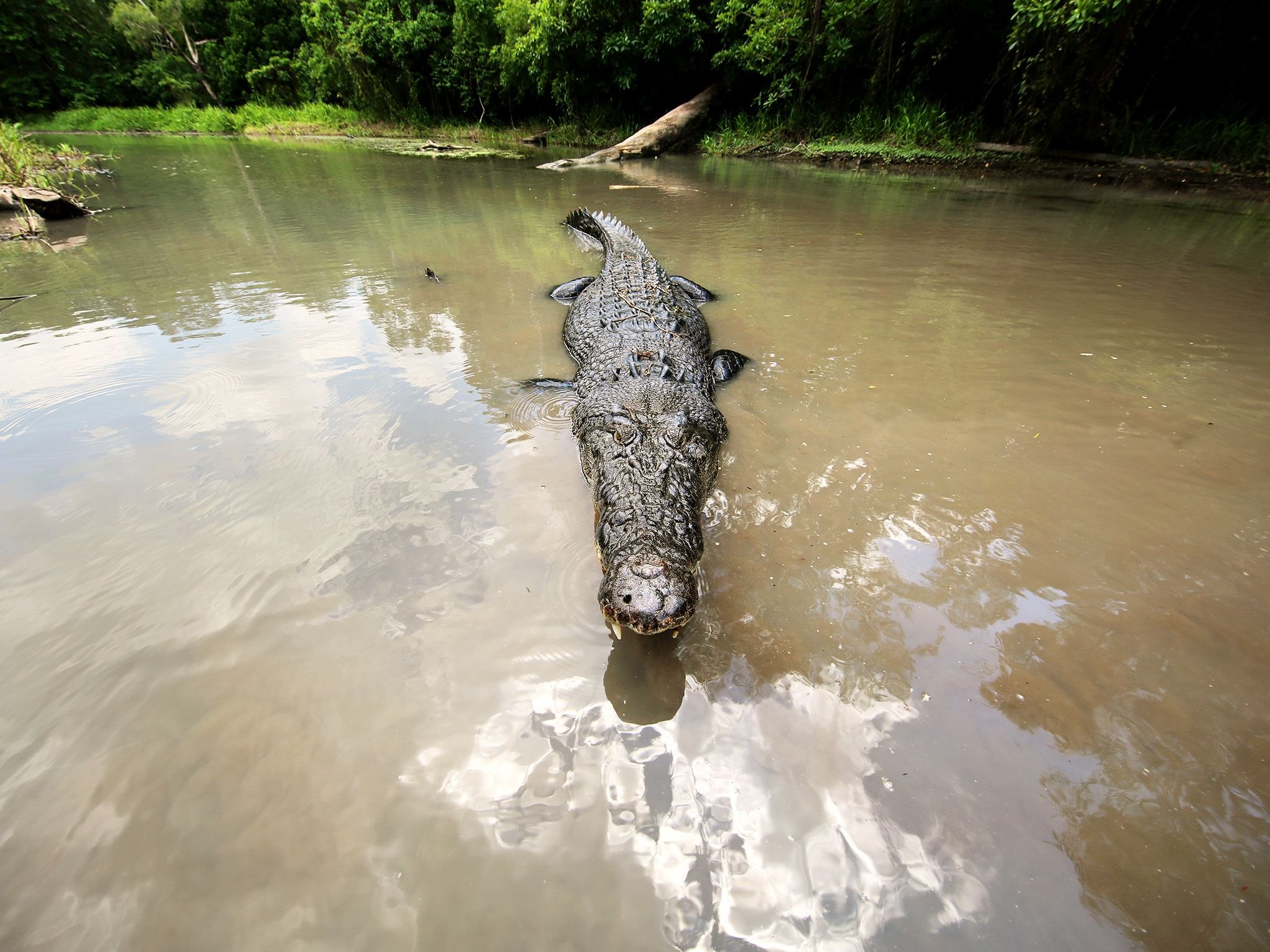 Northern Territory, Australia:  An Australian Saltwater Crocodile. This image is from Monster... [Photo of the day - January 2018]